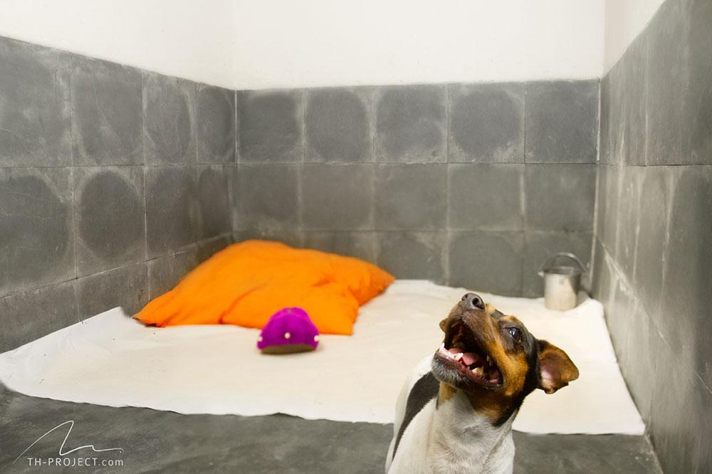 Canis do Tunghats Resort: Espaço Standard