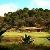 Galeria de Imagens de Estrutura: Estrutura no Tunghat's Resort: Canis Arejados, muito verde e natureza!