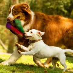 Galeria de Imagens de Estrutura: Muita diversão no Hotel para cães Tunghat's Resort