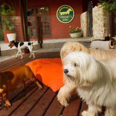 Galeria de Imagens: A turma se diverte no espaço novo, feito para eles! Um Hotel para cães sem igual!