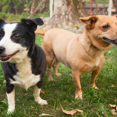 Galeria de Imagens: Em nosso hotel para cães, todos se divertem em nosso espaço!
